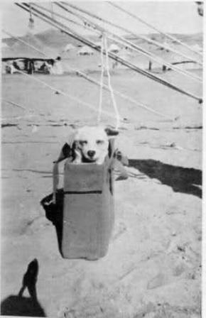 Horrie en su bolsa de transporte