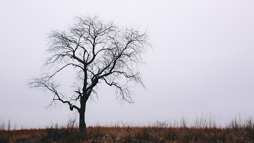 tree nature silhouette wisconsin outdoors midwest minimalism newberlin canoneos5dmarkiii sigma35mmf14dghsmart dualiso