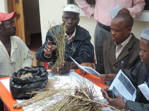 Farmers at the training examine various types of forage grass (Photo credit: IITA/Gloriana Ndibalema)