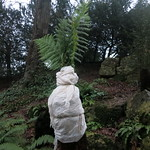 Wrapped Tree Fern