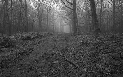 wood trees winter tree mono woods branch path fujifilm wgc xpro1 sherrards 18mmf2 gor44
