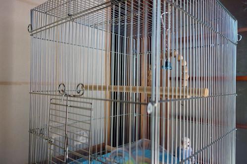 Budgerigar_Ico_(2014_07_27)_3 セキセイインコが居る鳥籠を撮影した写真。