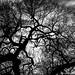 Diablo Tree by Michael Seeley