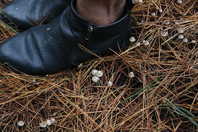 Mushroom Forage / YFM x Kinfolk