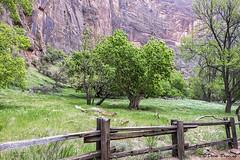 Zion National Park, UT  2016