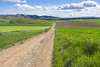 Camino Near Ciruena