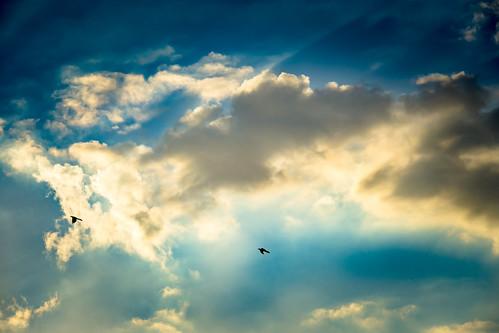 sunset sky cloud bird nature weather animal austin outdoors us flying texas unitedstates dusk