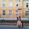 Mein Job hier ist sehr abwechslungsreich, draussen #bahnhofshuetehund, hinter den Mauern #Atelierhuetehund. Also,ich muss dann mal los, auf Wiederwedeln! :paw_prints::paw_prints::paw_prints::dog2::paw_prints::paw_prints::paw_prints:#dogsofinstagram #redbo