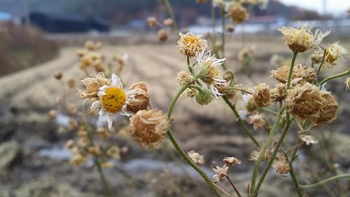시골집 풍경 | 김장시즌