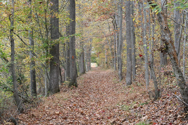 James River State Park Fall 2014 (166)