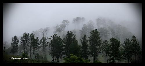 wood trees sky fog forest indonesia smoke gunung aceh hutan pemandangan pohon negeri tenteram gayo kabut lindungan tentram
