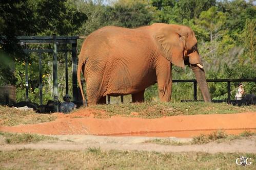 Zoo Miami 14.11.2014 84