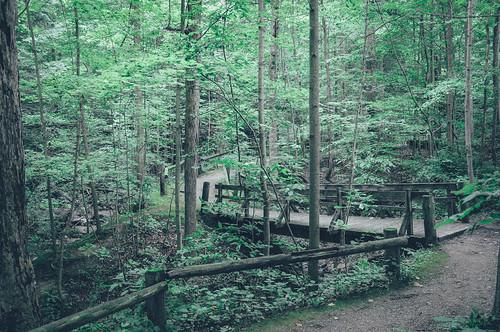 park ohio green vintage woods nikon cleveland retro grainy clevelandmetropark chagrinreservation nikond90 vsco vscofilm