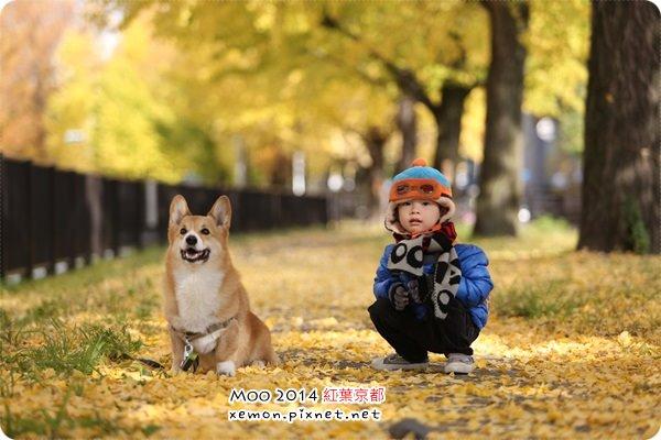 小哆哆 & 狗狗