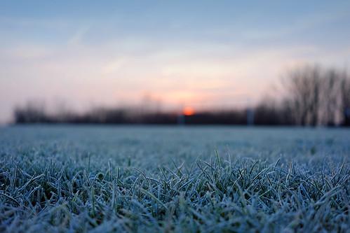 morning sun mañana grass sunrise frost bokeh cardiff amanecer cesped pontprennau fujifilmxm1
