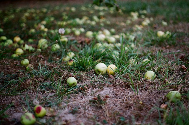 apples (not falling far).