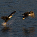 Eagle Fishing Sequence by CraigGoodwin2