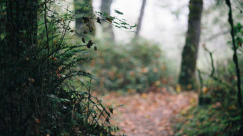 trees nature bokeh path depthoffield pacificnorthwest washingtonstate canon135mmf2lusm canoneos5dmarkiii