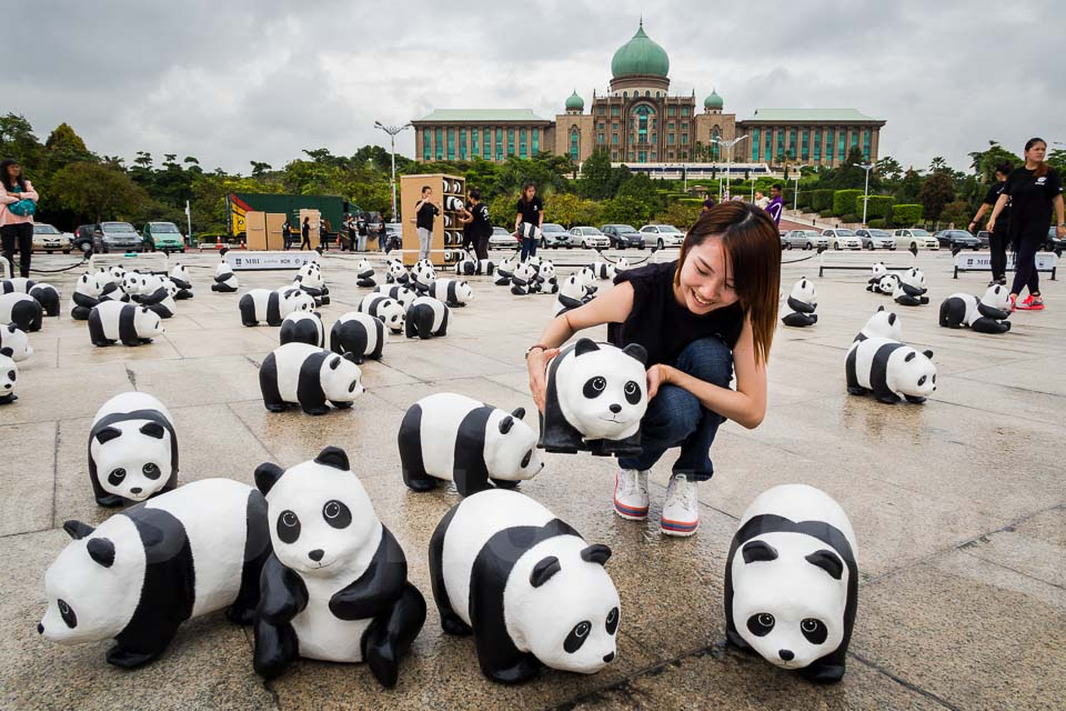 Part of 1,600 pandas invades @ Putrajaya, Malaysia