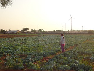 A vegetable farm at Baadi