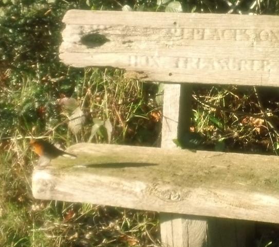 Robin on bench 1 near Chartwell