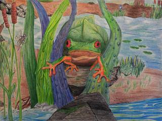 Reshma-Modi-red-eyed-treefrog-McNair-JC