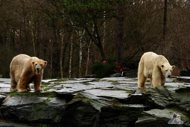 Tierpark Berlin 10.01.2014 195