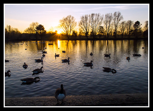 winter sunset fujifilm peterborough canadageese contrejour x20 ortonmere fujifilmx20