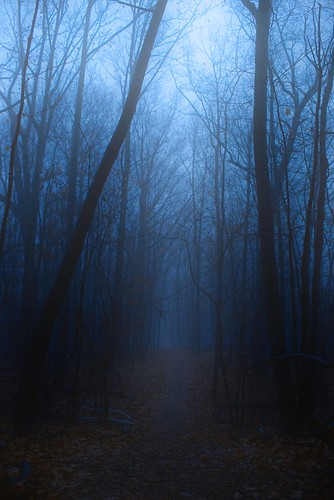 tree fog night nikkor50mmf12 sonyalpha7rilce7ra7r sony0mmf00