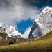Mountaineering Cow of Huayhuash by Pichaya V. (Zolashine)