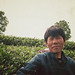 cueilleuse à Fuding, Fujian