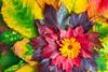 Blätterblume by puetsch
