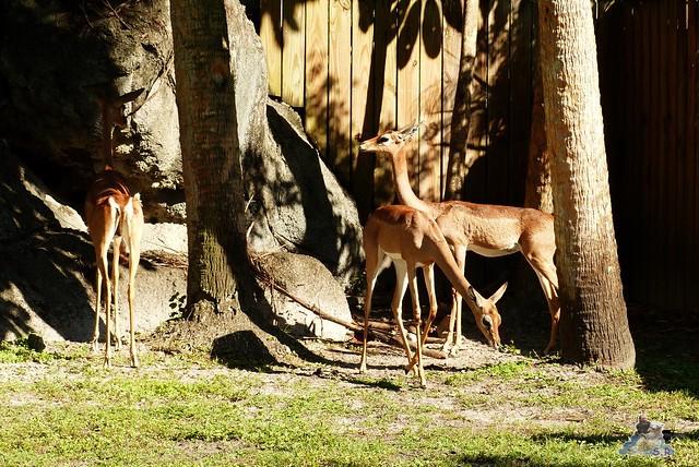 Zoo Miami 14.11.2014 104