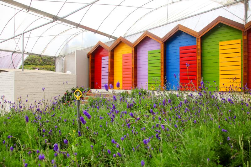 Colourful-Doors
