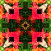 symmetryandcolors