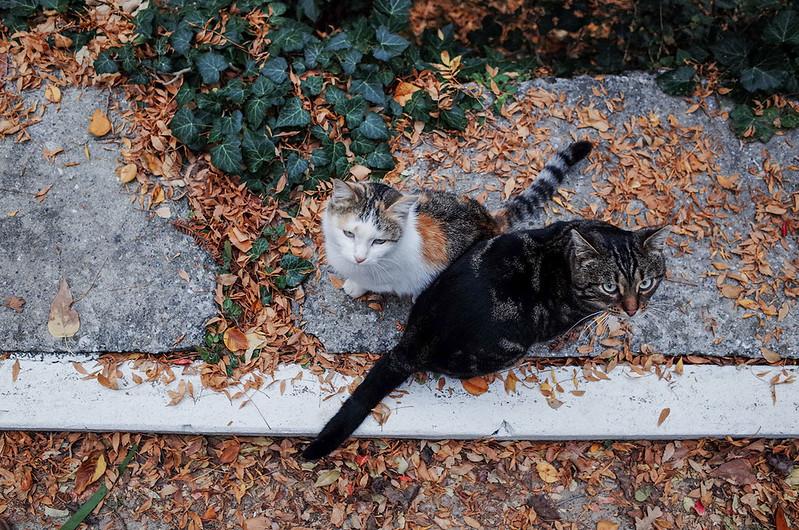 Crimea cats