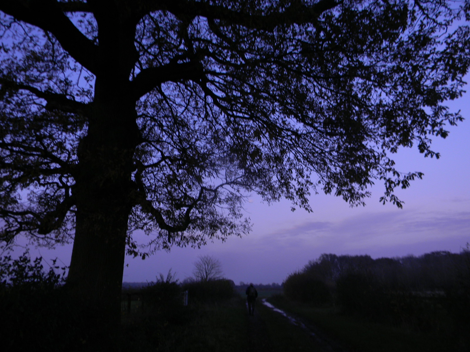 Tree at dusk Wakes Colne to Bures