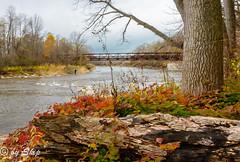Riverscape-Chagrin River Park