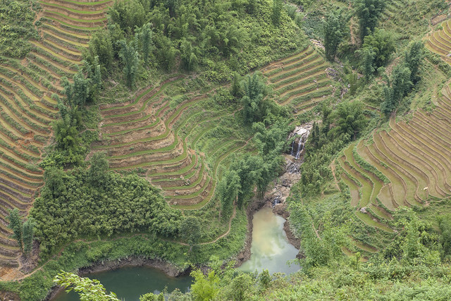 Waterfall and Terraced Paddies | Sapa, Vietnam