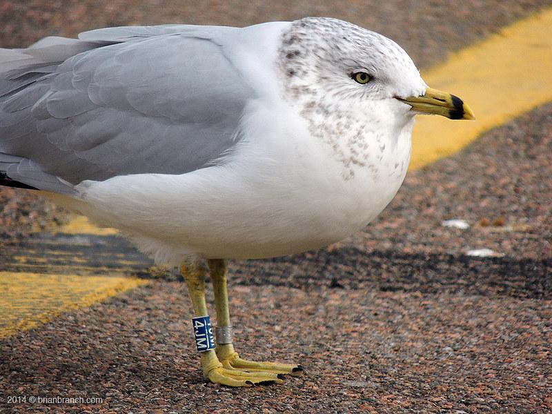 DSCN9644_seagull