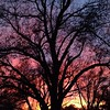 Now this is how you sunset. #oklahoma #sunset #pecantree #oklahomacity