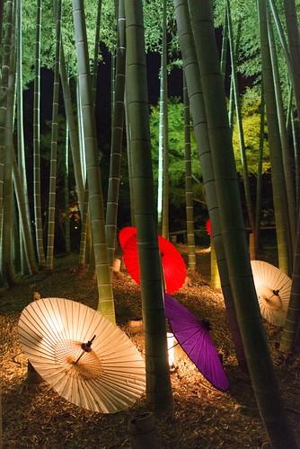 高台寺竹林の傘