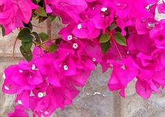 Colori di Cipro | Colours of Cyprus - I