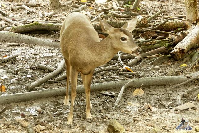 Belize Zoo 19.11.2014 46
