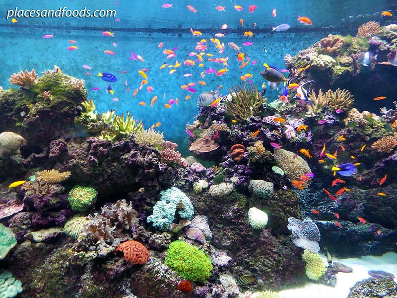 sea aquarium colourful fish