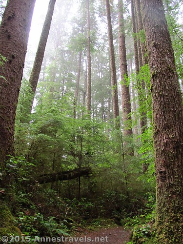 The rain forest near Third Beach, Olympic National Park, Washington