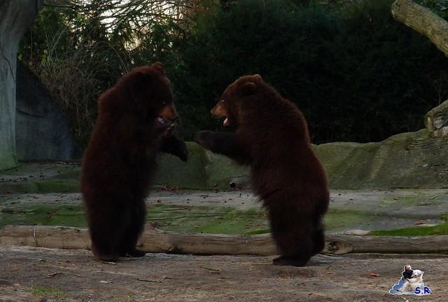 Tierpark Hagenbeck 92