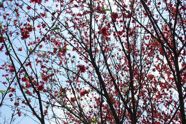2014-04-19_00348_美の山.jpg