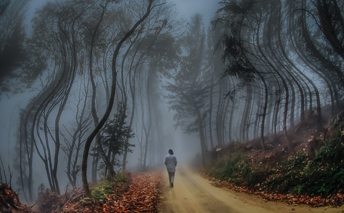 road autumn winter cloud distortion fog forest landscape austria outdoor surreal going spooky unknown reality uncanny uncertainty