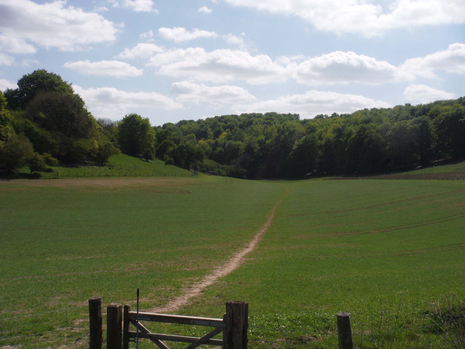 View back to Germanleith Copse SWC Walk Rowlands Castle Circular - Extension